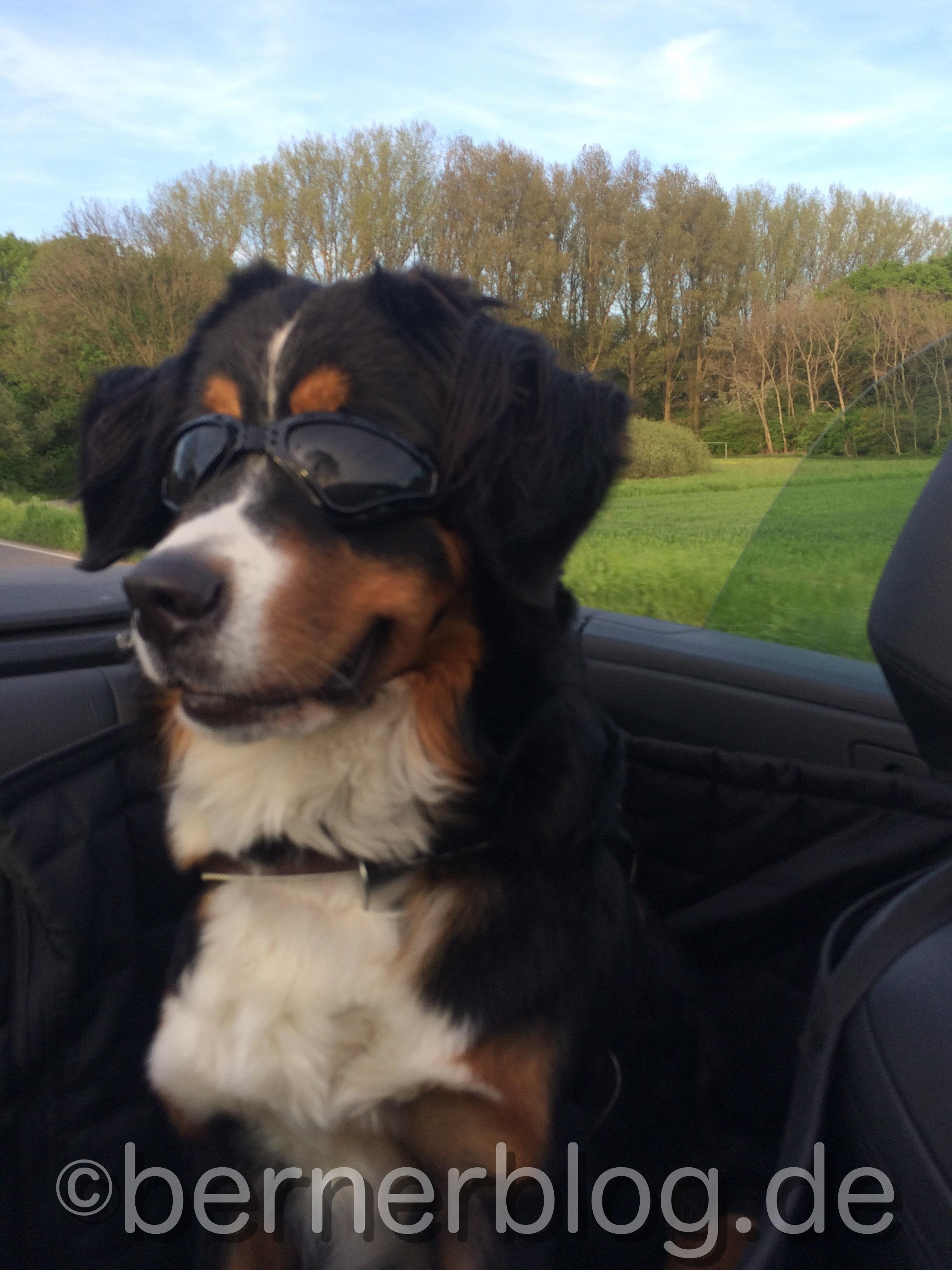 Skye fährt Cabriolet